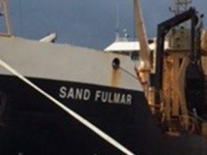 Image of Sand Fulmar