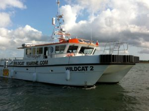 Image of Wildcat 2