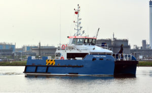 Image of Fastnet Petrel