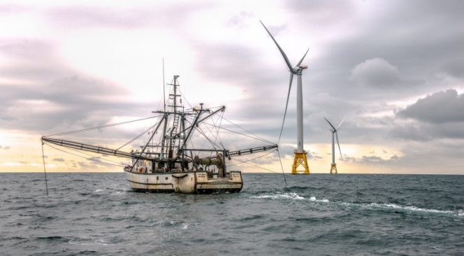 US to Conduct Fisheries Research to Guide Offshore Wind Development