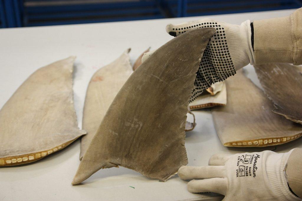 Haaienvinnen in beslag genomen. Foto RVO 23-4-2019