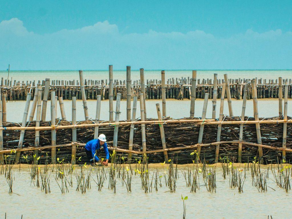 Constructiewerk met mangrove. Foto, Boskalis.
