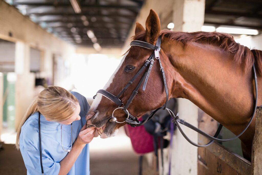 Dierenarts controleert het gebit van een paard. Foto, Havenbedrijf Rotterdam.