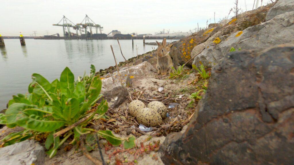 Pasen op de Maasvlakte. Foto, Veldkijker.