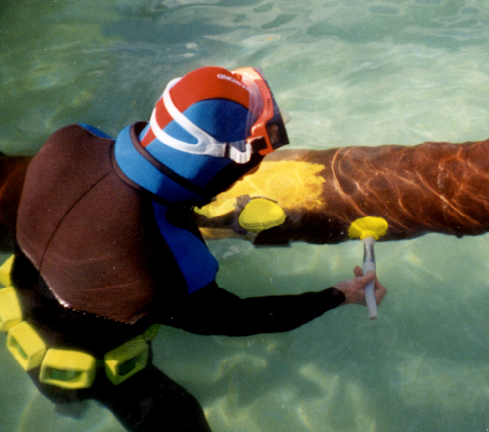 A diver hand paints Alocit in the splash zone to the legs of a gas platform.