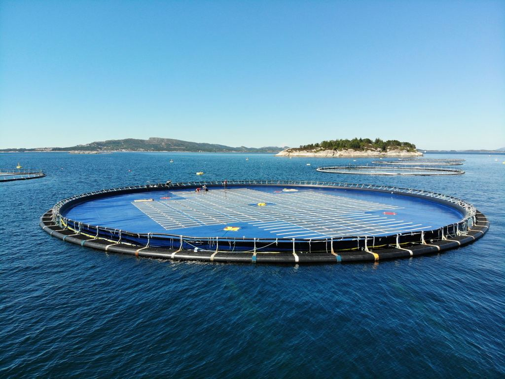 Illustration/Ocean Sun's floating solar plant (Courtesy of Ocean Sun)