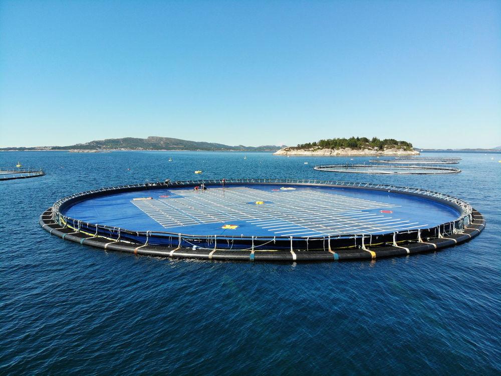 Illustration/Ocean Sun's floating solar technology (Courtesy of Ocean Sun)